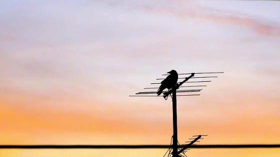 DAB Antenne