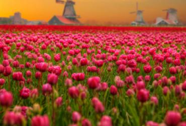 Lokales DAB+ Niederlande